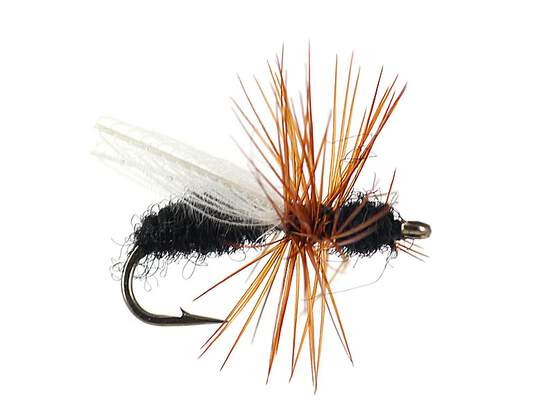CDC Flying Ant Black