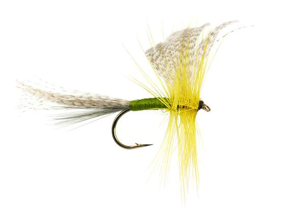 Golden Olive Mayfly Dun