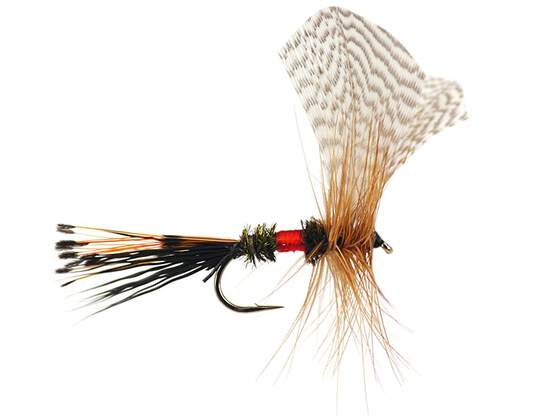 Royal Fan Wing Mayfly